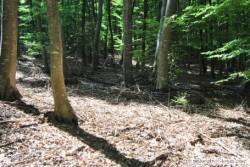 Деревья и кустарники Крыма Растительный мир Крыма