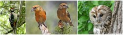 Птицы Крыма Животный мир Крыма