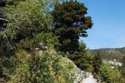 Голицынская тропа. Новый Свет